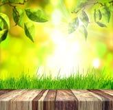 新春天绿草和叶子有绿色bokeh、阳光和木头地板的 免版税库存照片