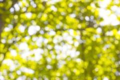 从太阳的背景Bokeh在树下树荫  免版税图库摄影