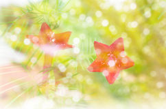 Цветок и bokeh освещают с романтичным чувством зимы и снега Стоковая Фотография