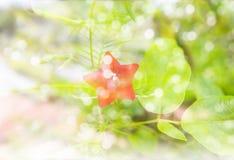 Цветок и bokeh освещают с романтичным чувством зимы и снега Стоковое Фото