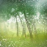 摘要被弄脏的梦想的奥秘神仙的森林和闪烁bokeh光 被过滤的图象和构造 免版税库存照片