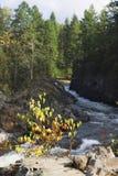 Bokeh 9 di autunno Fotografia Stock