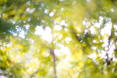 Bokeh abstract nature background. Stock Photo