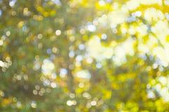 Bokeh abstracto de la luz del sol Fotografía de archivo libre de regalías