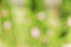 Bokeh abstracto y fondo verde borroso de la naturaleza Foto de archivo libre de regalías