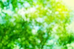 Bokeh abstrait d'arbre de vert de fond, nature de tache floue Image stock