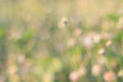Bokeh abstrait de prairie de tache floue Photographie stock