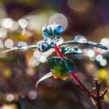 Bokeh Abundance Royalty Free Stock Photography