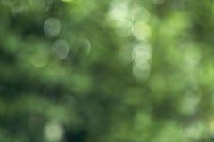 bokeh achtergrond van het de zomerbos Royalty-vrije Stock Afbeeldingen