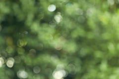 bokeh achtergrond van het de zomerbos Stock Afbeeldingen