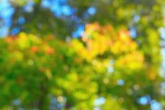 Bokeh autumn Stock Image