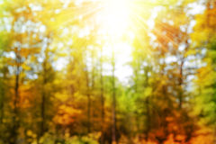 Bokeh in the Autumn forest. Stock Image