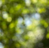 Bokeh av trädbakgrund Royaltyfria Foton