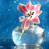 bokeh azul del fondo del florero de cristal del ramo de la flor del tulipán texturizado imagen de archivo libre de regalías