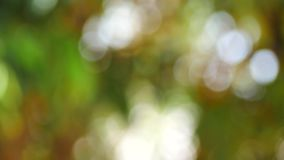 Bokeh and backdrop. Bokeh and a variety of beautiful background colors stock footage