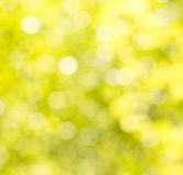 Bokeh background of foliage. Stock Photo