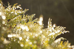 Bokeh background with green trees elements Royalty Free Stock Photo