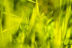 Bokeh Background greenery in sunny spring day, defocus natural. Close-up photo Stock Photos