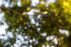 Bokeh background. Natural pink Bokeh background tree white royalty free stock photos