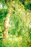 Bokeh Royalty Free Stock Photo