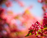 Bokeh background in spring Stock Image