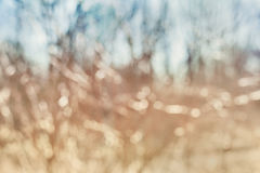 Bokeh background, spring trees out of focus Stock Photo