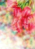Bokeh bakgrund med tulpan Fotografering för Bildbyråer