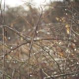 Bokeh Berry Branches em um dia de inverno fotos de stock royalty free