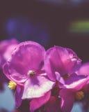 Bokeh blomma Fotografering för Bildbyråer