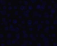 Bokeh blu Immagine Stock