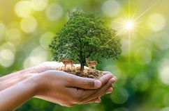 Bokeh blur green background tree in the hands of trees growing seedlings. Bokeh green Background Female hand holding tree on natur