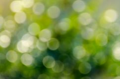Bokeh blur green background Water reflection Bokeh blur green background