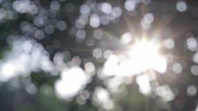Bokeh blur tree Stock Photos