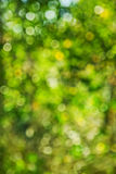 Bokeh blurred foliage Royalty Free Stock Image
