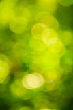 Bokeh of blurred leaves Royalty Free Stock Photo