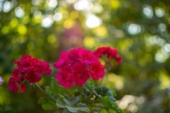 Bokeh bonito de uma flor fotografia de stock royalty free