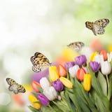 Bokeh colorido de los tulipanes imagen de archivo libre de regalías