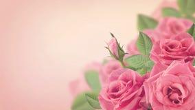 Bokeh cor-de-rosa das rosas imagem de stock royalty free