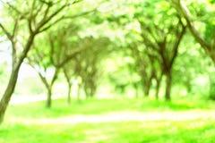 Bokeh d'arbre de tache floue Photographie stock libre de droits
