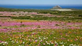 bokeh dandelion światła wiosna wildflowers Zdjęcia Stock