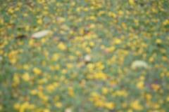 Bokeh das flores no borrão do fundo da grama verde Fotografia de Stock