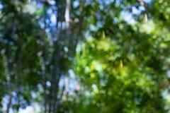 Bokeh de bambu da floresta de Defocus foto de stock