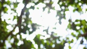Bokeh in de boomkroon in de zon stock videobeelden