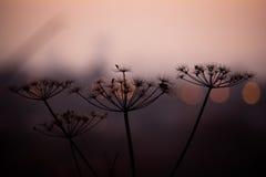 Bokeh de crépuscule Photos libres de droits