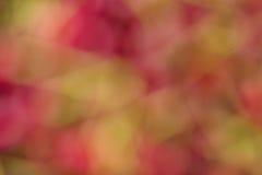 Bokeh de la cereza Fotografía de archivo