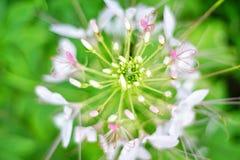 bokeh de la flor Imagenes de archivo