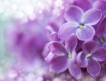 Bokeh de la lila Fotografía de archivo libre de regalías