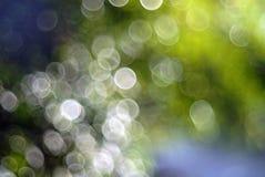 Bokeh de la luz del sol en las hojas y las ramas defocused de un árbol fotos de archivo libres de regalías