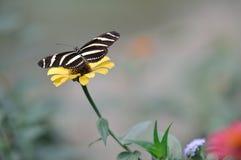 Bokeh de la mariposa Foto de archivo libre de regalías
