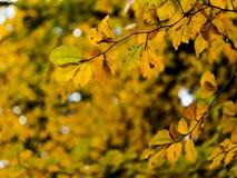Bokeh de las hojas de otoño imagen de archivo